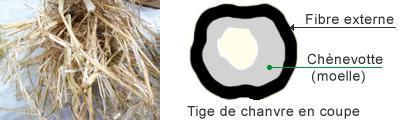 Paille de chanvre et coupe d'une tige